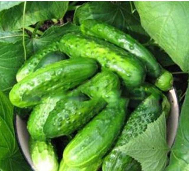Mini Cucumber Seeds, 100pcs/pack