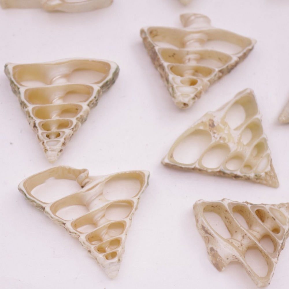 Купить с кэшбэком 10 PCS 30mm-35mm Conch Shell Natural White Mother of Pearl Charms Pendants