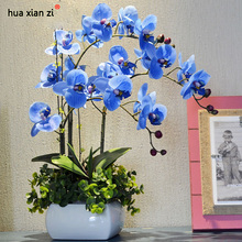 Sky Blue Phalaenopsis Orchid Seeds Flower Seeds Indoor Bonsai Orchids 100 particles / lot(China)