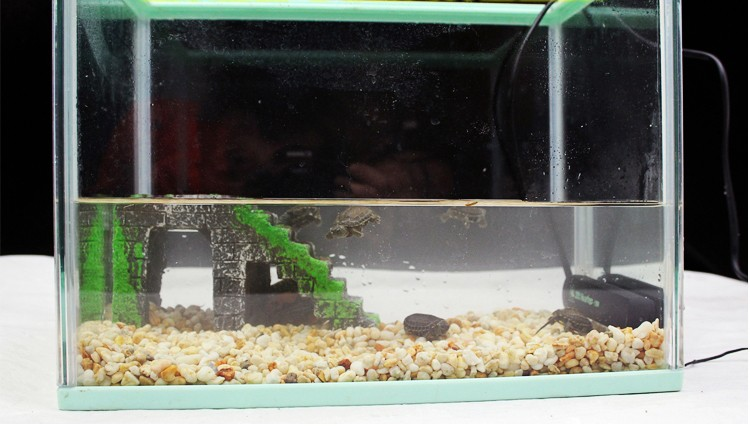 fish tank thermostat 25 degree 8-50 watt submersible mini constant temperature heater