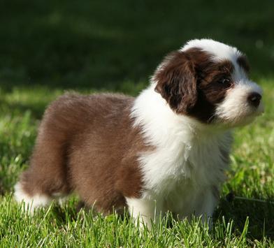 狗狗身上有跳蚤会跳到人身上吗?宠物店都在用的方法