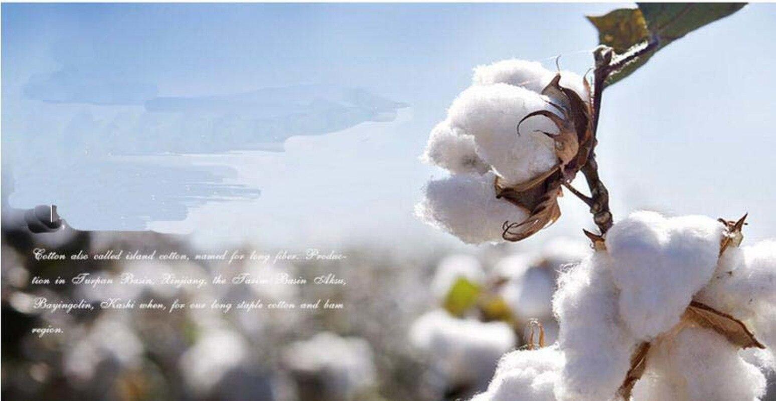 cotton culin plan ahead - HD2560×1700