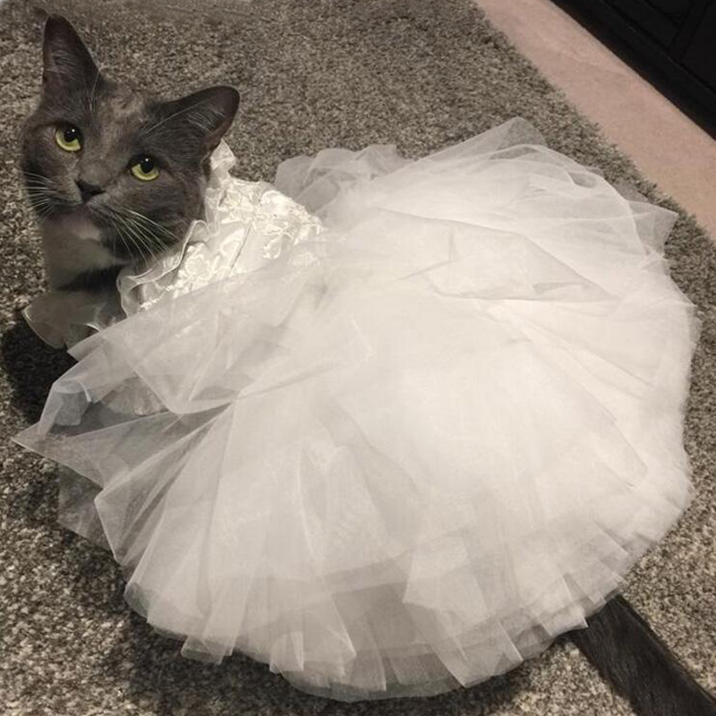 фото попки в кошачьем платье значения тот дрочит