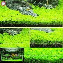 Aquatic grass seeds Aquarium watering plants seeds for room fish tank pool pond supplies pot Indoor bonsai Best packaging 500pcs