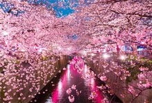 Laeacco Dusk Light Drain Cherry Blossoms Scenic Photography Backgrounds Customized Photographic Backdrops For Photo Studio laeacco mountains snow spring cherry blossoms scenic photography backgrounds customized photographic backdrops for photo studio