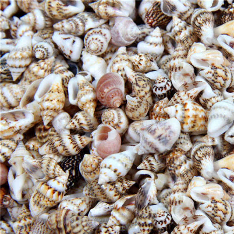 50/100Pcs 2-3cm Small Seashells Aquarium Mini Conch Micro-landscape Sea Shells Natural Crafting Shells For Craft