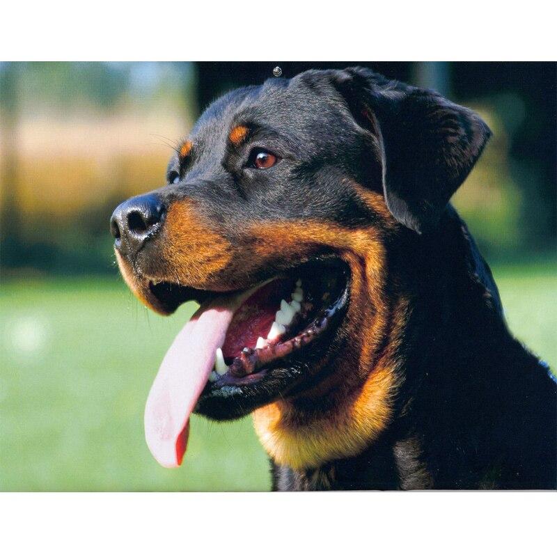 5d Diamond Embroidery Rottweiler 3d Diamond Picture Animal Dog Mosaico Cross Stitch Painting Rhinestones Home Accessories