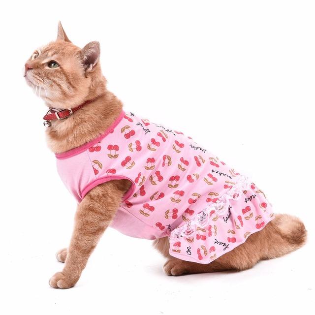 Summer Cat Dress of course