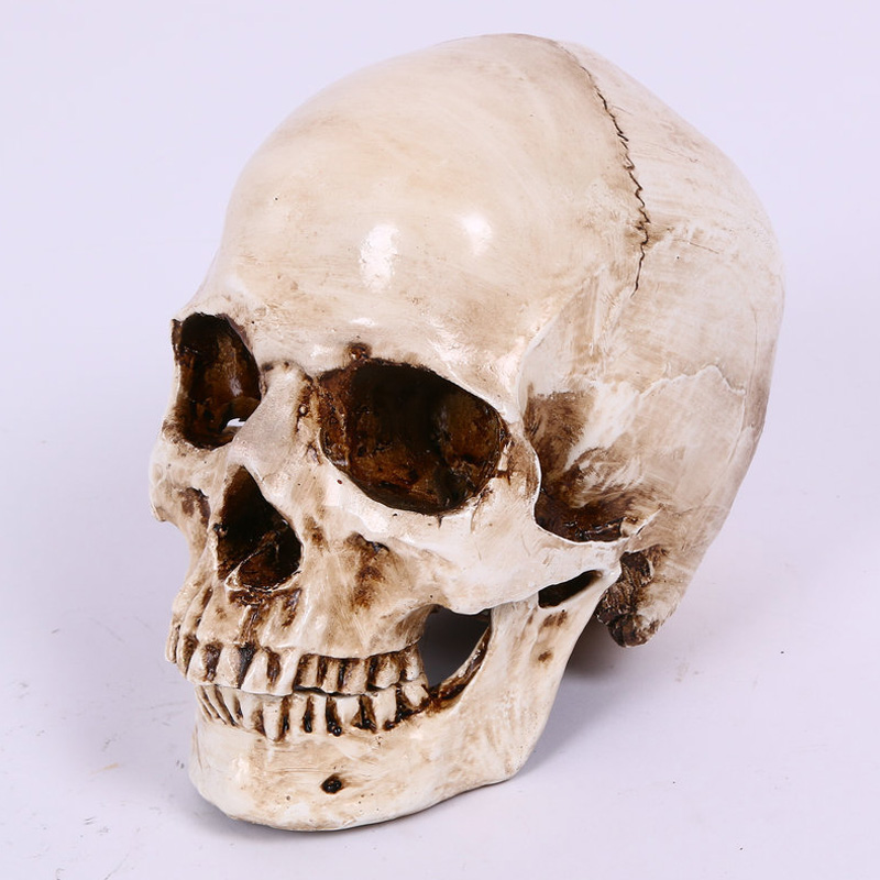 Craft Skull Human Head Halloween Party High Quality Resin Replica Medical Model Lifesize 1:1 Collection Home Decor