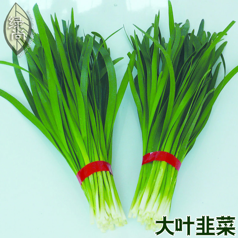 Large leaved Chinese chive continuous harvest Warming liver and kidney courtyard balcony potted vegetable bonsai 100pcs