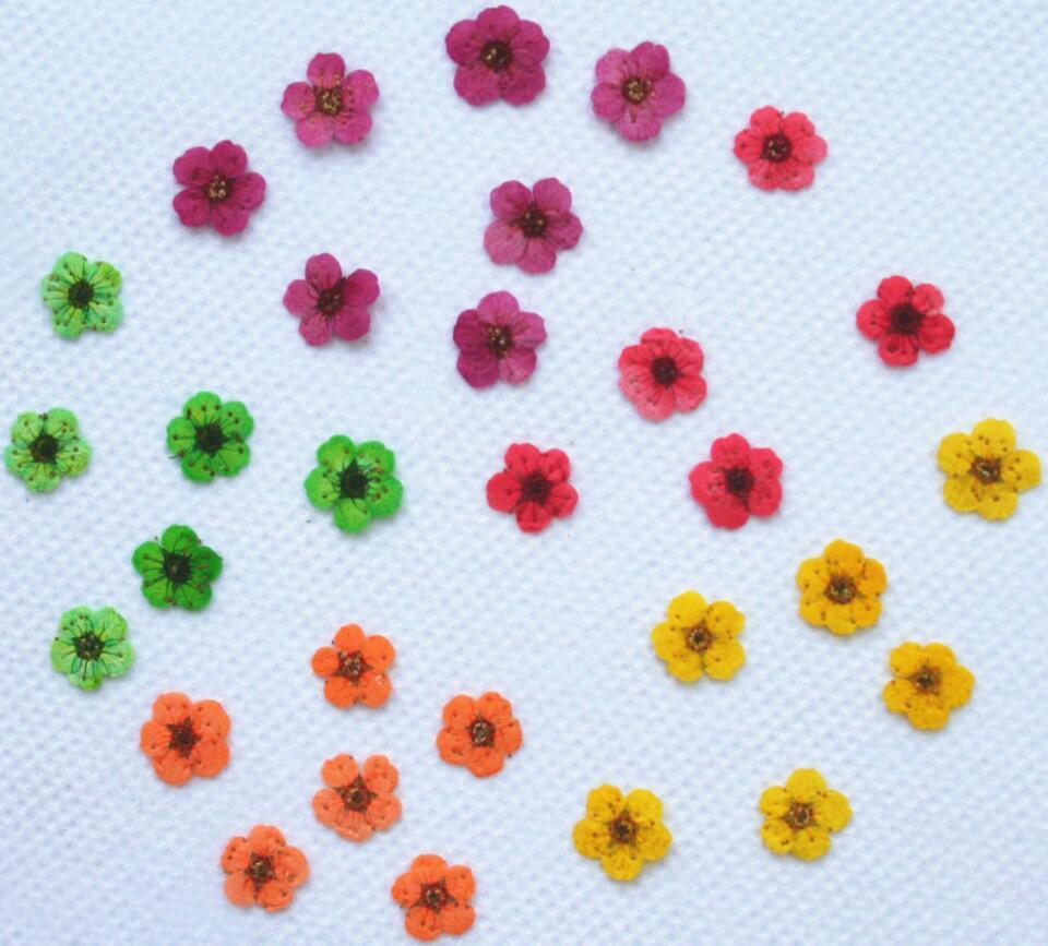 Acheter 1000 pcs Pressées Séchées Fleur De Prunier Fleur Plantes Sèches Pour Époxy Résine Pendentif Collier Bijoux Faisant Bricolage Accessoires de Artificielle et Fleurs Séchées fiable fournisseurs
