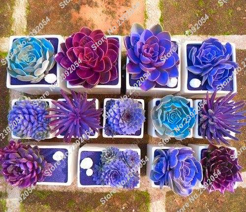 Mix Color 100pcs Rare Beauty Succulents Seeds Easy To Grow Potted Flower Bonsai Seeds For Home Garden