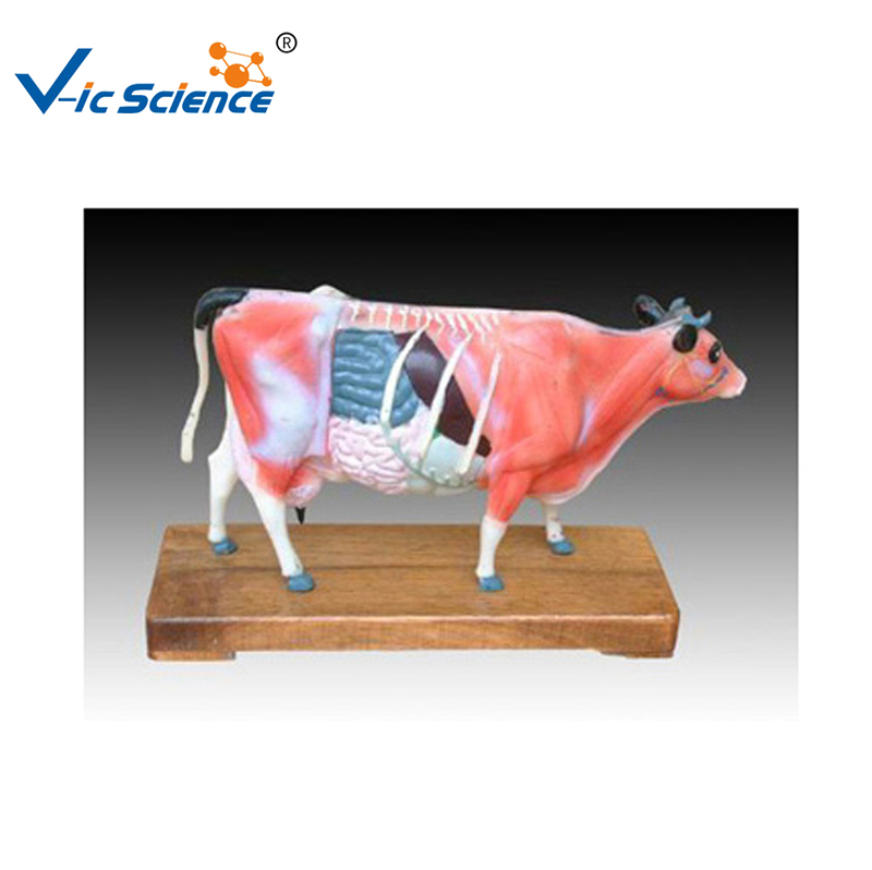 PVC Made Animale Bovini Agopuntura ModelloPVC Made Animale Bovini Agopuntura Modello