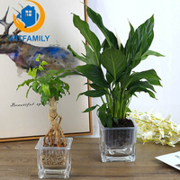 Modern Simple Square Water Culture Green Radish Glass Bottle Automatic Watering Glass Vase Thickening Small Flower