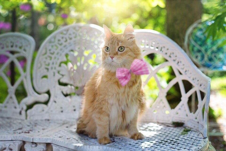 cat-2358830_960_720
