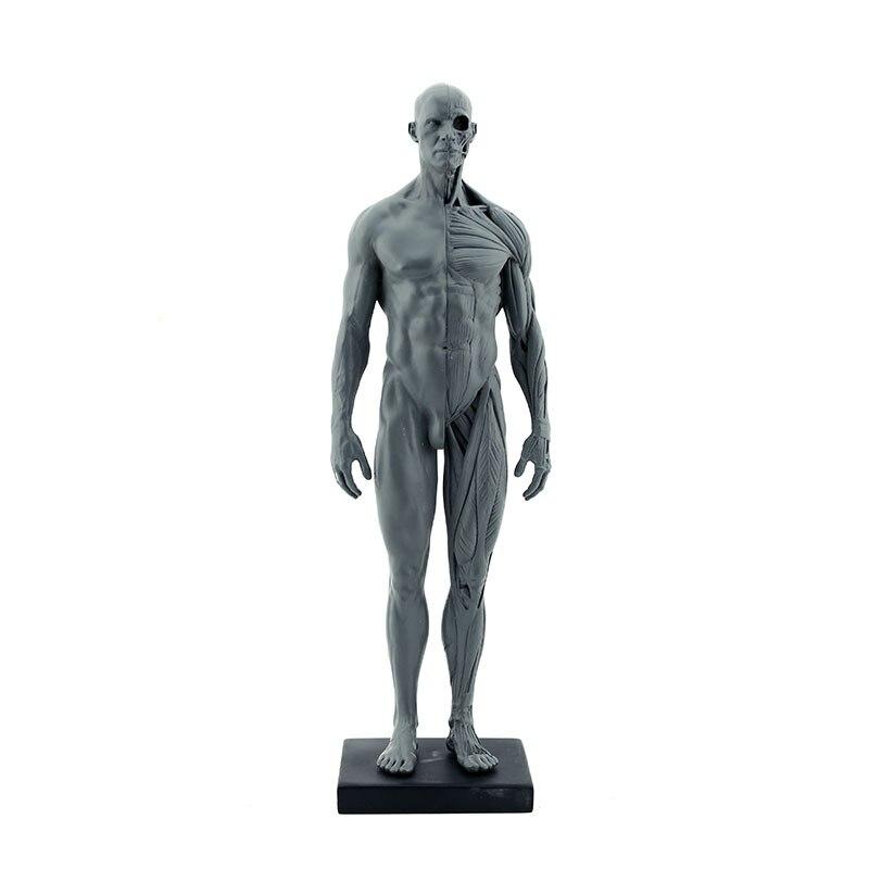 Großzügig Männer Körperanatomie Ideen - Anatomie Ideen - finotti.info