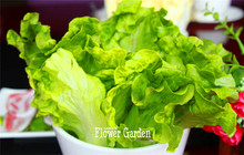 New Seeds 2017!10 Seed/Pack Italian Lettuce Seeds good taste , easy to grow, great salad choice ,DIY Home seeds vegetables,#C72E