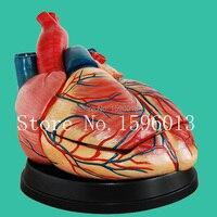 解剖心臓モデル 3 部品、ハート増幅モデル、拡大心臓モデル