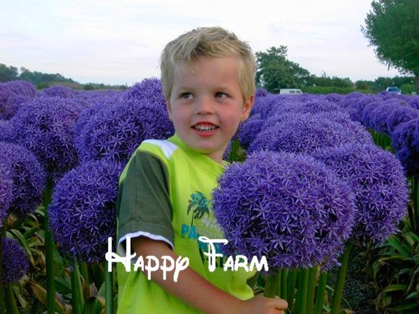 10seedsbag purple giant allium giganteum beautiful flower seeds garden plant the budding rate 95 rare flower for kid
