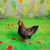 Simulation Chicken Polyethylene Furs Chicken Model Funny Gift About 18cmx12cmx24cm