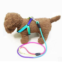 Free shipping New Cute Rainbow Dog Collar Adjustable Comfortable Pet Collars For Dogs Puppies Pets Collars Outdoor T050