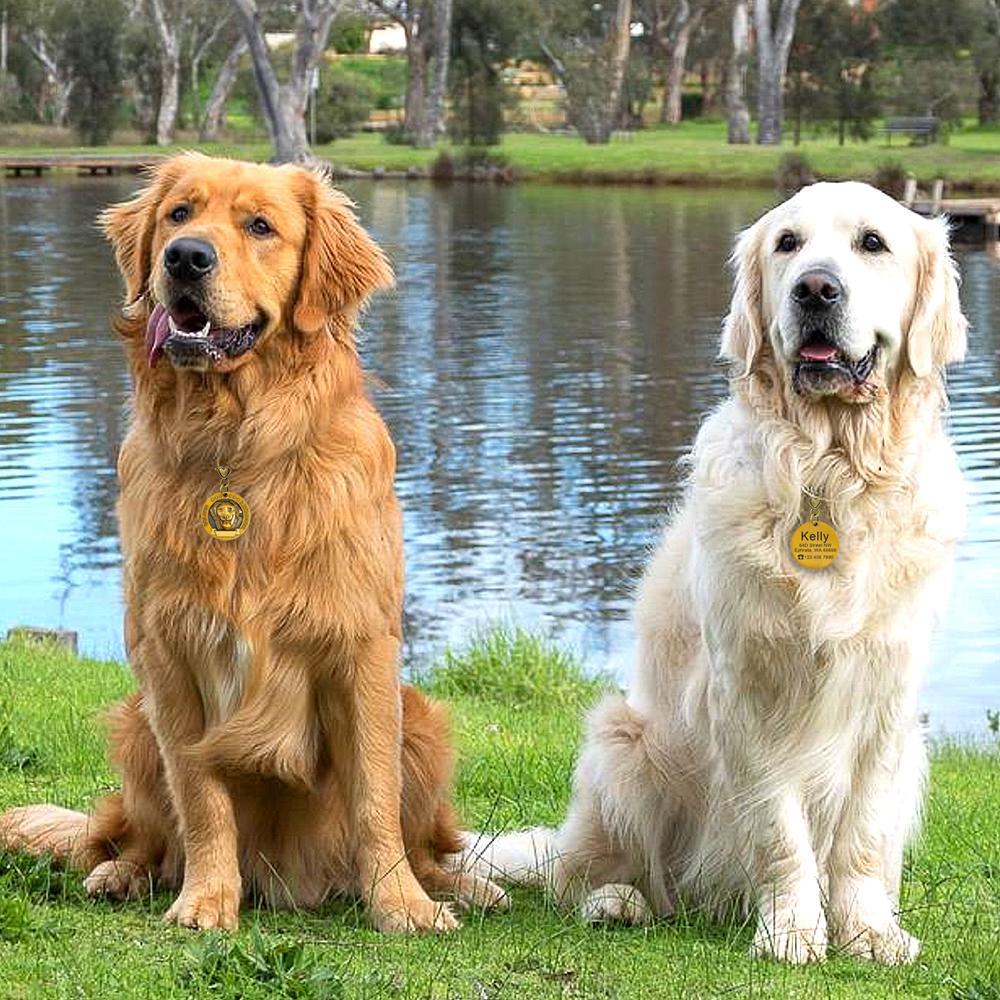 Placa de identificación de perro personalizada 11