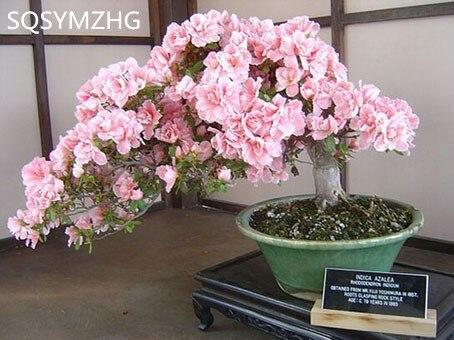 online kaufen großhandel blossom baum aus china blossom baum, Best garten ideen