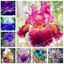 20Pcs / Bag Bonsai Iris Flower Perennial Garden Rare Flowers Bearded Plants, Nature Orchid Plants Plant