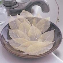Beauty Health - Bath  - 100pcs/Pack Convenient Washing Hand Bath Travel Leaf Soap Slice Bathing Cleansing Leaves Soap Y1-5