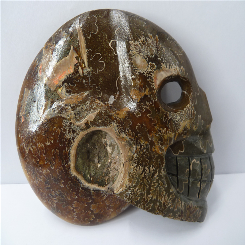NATURAL Conch fossil Crystal carved skull HEALING T768