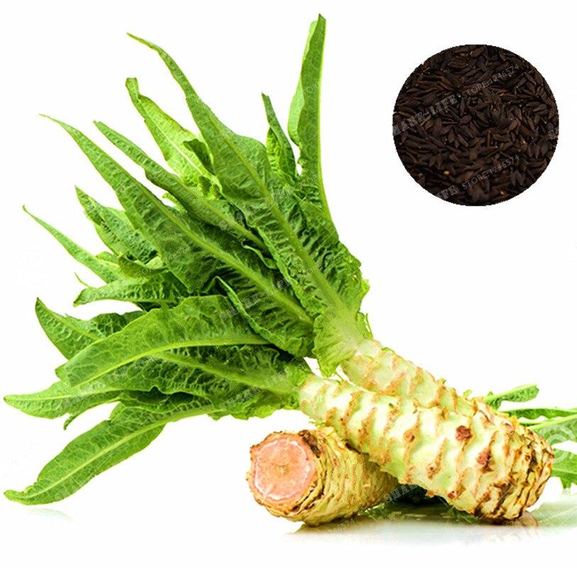 100 pc Asparagus bonsai salat er en lækker, økologisk kinesisk selleri hybrid og vegetabilsk frø til dyrkning indendørs ...