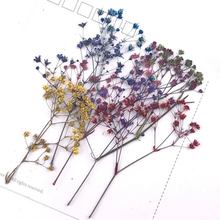 10 sztuk/partia suszone gałęzie z kwiatami wzór zakładki materiał karta diy wtopiony kwiat obrazy akcesoria do dekoracji strony