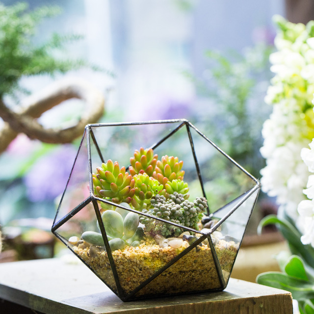 17CM Tabletop Bowl Shape Geometric Glass Terrarium Flower Bonsai Pots Vase  Garden Plants Succulent Planter Decorative