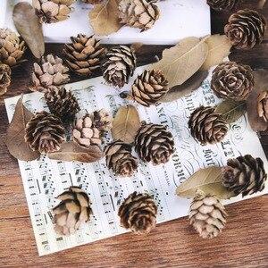 Image 1 - 5 adet/grup Doğal Mini Çam Fıstığı Sedir Meyve Ev Düğün Noel Ağacı Dekorasyon Fotoğraf Aksesuarları Fotoğrafları Sahne