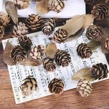 5 pièces/lot Mini pignons de pin naturels cèdre fruits pour la maison de mariage arbre de noël décoration pour photographie accessoires accessoires de Photos