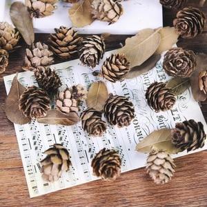 Image 1 - 5 pz/lotto Cedro Naturale Mini Pinoli Frutta Per La Casa Matrimonio Albero Di Natale Decorazione per Accessori Per la Fotografia Foto di Scena