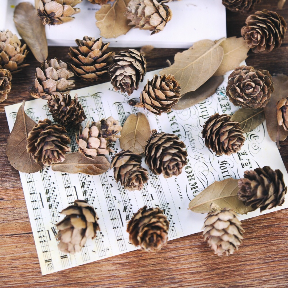 5pcs/lot Natural Mini Pine Nuts Cedar Fruit For Home Wedding Christmas Tree Decoration For Photography Accessories Photos Props