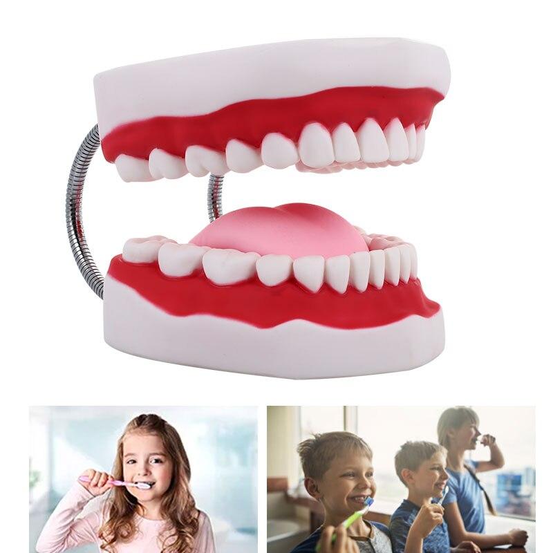 Specializzata Dente Modello Infermiera PVC Modello Medico Dental Clinic Durevole Dental Modello di Stomatologia di CuraSpecializzata Dente Modello Infermiera PVC Modello Medico Dental Clinic Durevole Dental Modello di Stomatologia di Cura
