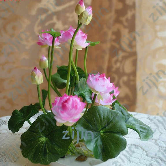 Bonsai ดอกไม้ lotus flower สำหรับฤดูร้อน 100% จริงชาม lotus bonsai สวนพืช 5 ชิ้น/ถุง