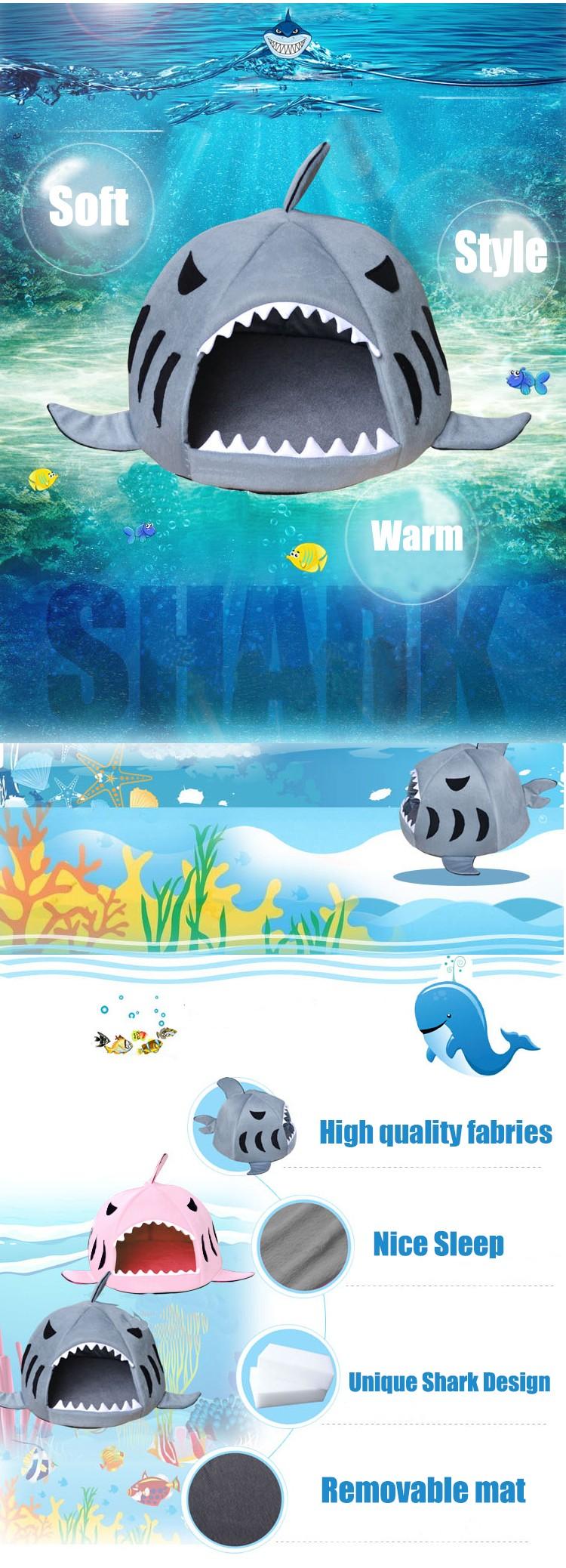 shark phtotos