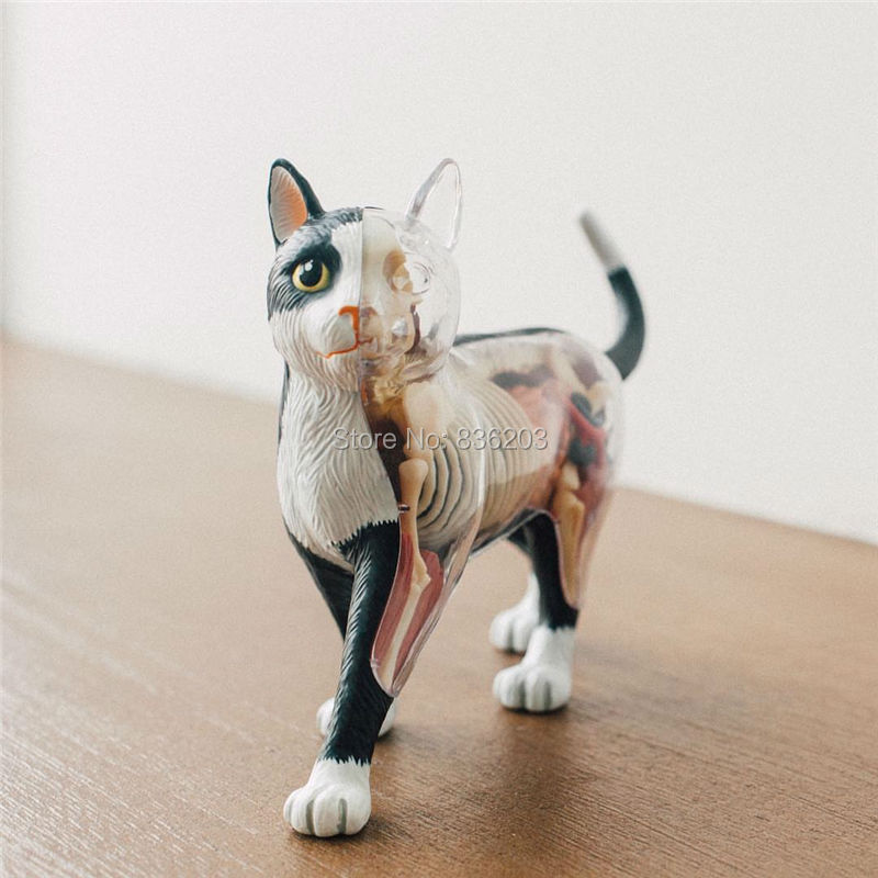 4D master visionTHE DISSECTED CAT funny ANATOMY MODEL medical human skull skeleton anatomical model Science Educational Toys