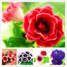 100 seeds / bag Gloxinia seeds plant flowers Plena sinningia gloxinia bonsai for garden Flower potted planters.