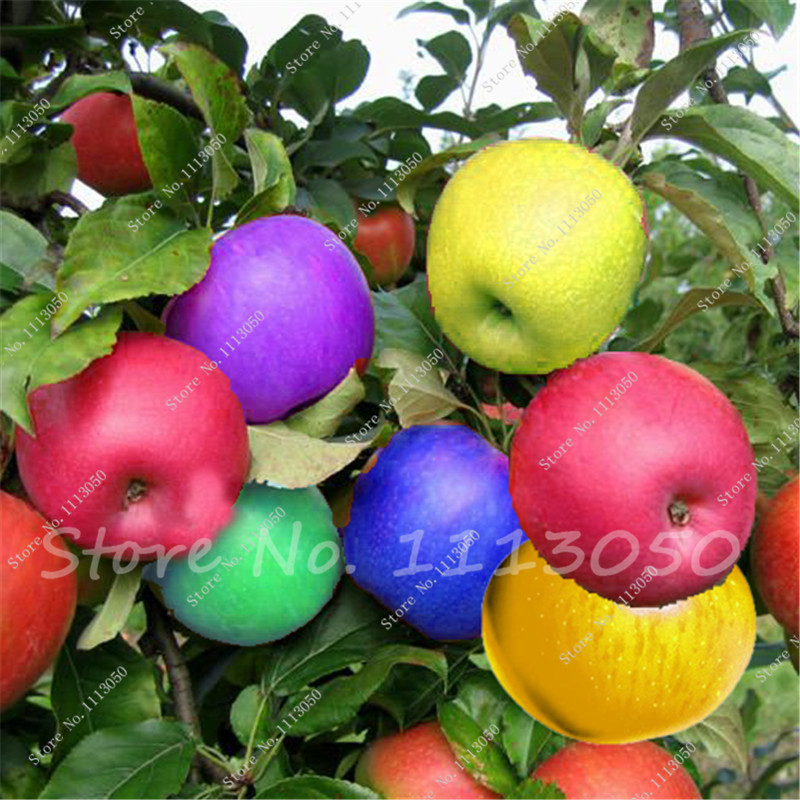 fruit pick up lines bonsai fruit tree