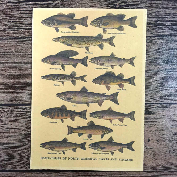 Free ship vintage prints poster Fish Chart retro painting wall art crafts sticker wallpaper bar cafe decor 42x30cm ZNP-B118