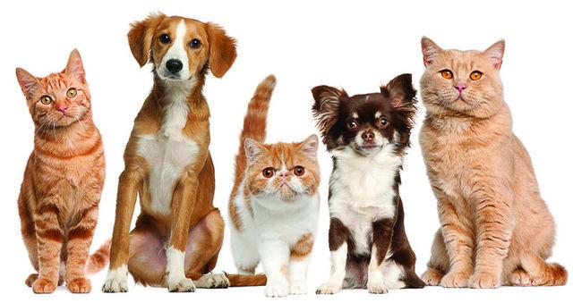 Cat Dog Pets Wallpaper Girls Childrens Bedroom 3d Photo Wallpaper