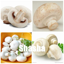 200 Pcs Organic Delicious Mushroom Bonsai, Funny Fungus Succulent Plant, Edible Health plants Very Easy To Grow For Home Garden(China)
