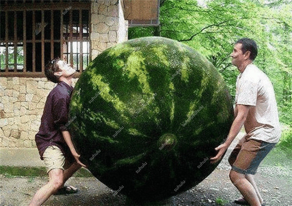 1980-watermelon