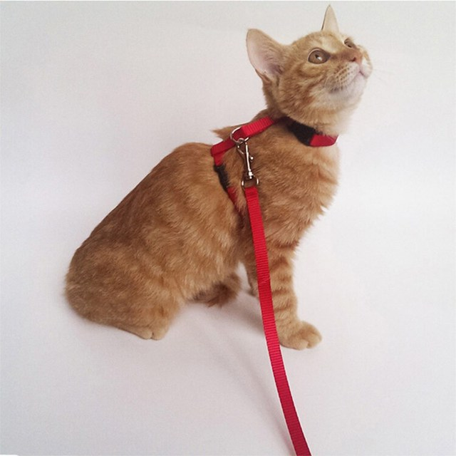 Normal Harness for Normal Cats