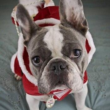 Funny Santa Dog Costumes  2