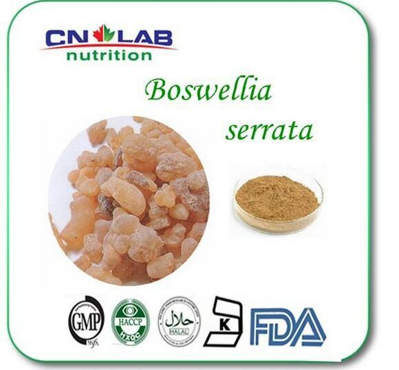 pure natural abirritation Boswellia Serrata Extract Boswllia acid Powder 60% by HPLC 400g/lot pure natural radix sophorae flavescentis extarct kuh seng extract 100g lot